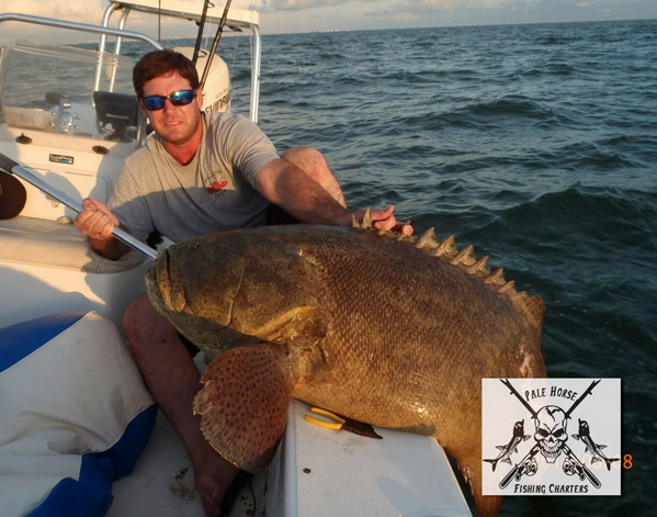 Pale horse fishing charters fort myers beach visit fort for Fishing charters fort myers florida